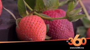 cover:  la 3ème édition du Festival national des fruits rouges à Kenitra