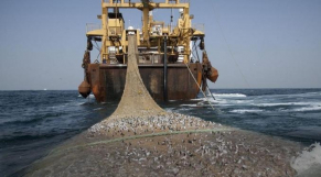 Cameroun: la flambée des prix du poisson préoccupe les autorités
