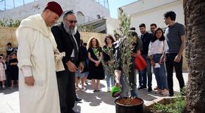 Casablanca-olivier de la fraternité