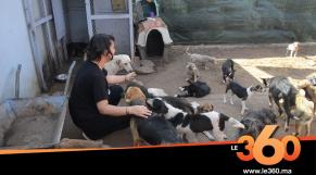 cover vidéo:Le360.ma •l'association Comme chiens et chats Maroc