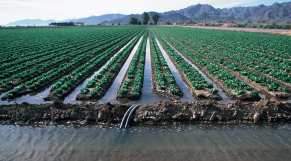 Terres agricoles collectives irrigation