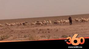 Cover Vidéo - البدو الرحل يعانون ويطالبون المسؤولين بالتدخل للتخفيف عنهم