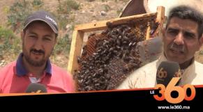 cover: تربية النحل بجبال الأطلس المتوسط