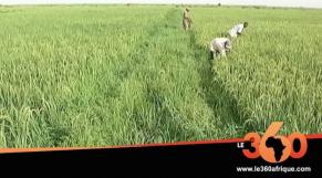Vidéo. Afrique de l'Ouest: quels partenariats face au défi de la sécurité alimentaire
