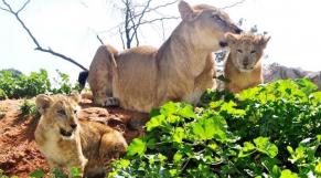 Zoo de Rabat
