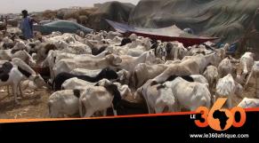 Moutons de sacrifices