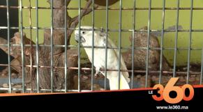 cover: حديقة الطيور بفاس