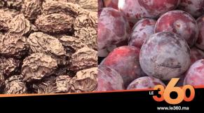 cover: اكتشف أكثر أنواع البرقوق شهرة بالمغرب