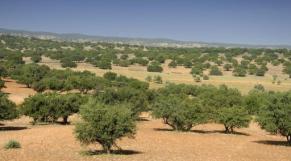 Arganeraie Souss