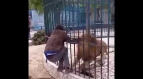 Vidéo. Zoo de Dakar: le lion manque d'arracher le bras d'un homme