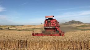 Moisson blé