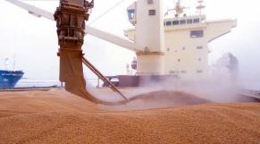 Céréales Import