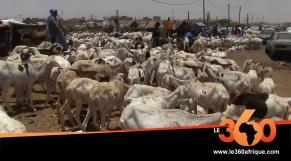 Vidéo. Mauritanie: avec le Covid-19, les clients se font rares pour les moutons de l'Aïd el Fitr