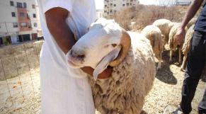 mouton de l'aid