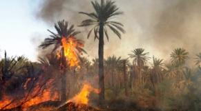 Incendie oasis