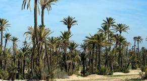 Palmeraie à Marrakech - Météo