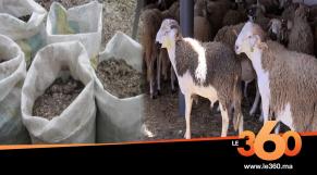 Cover_Vidéo: السرطان يهدد مغاربة بسبب الغش في علف الأضاحي