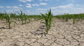 sécheresse agriculture