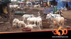Vidéo. Mali: la mévente de bétail de l'Aïd el-Kébir déprime les éleveurs