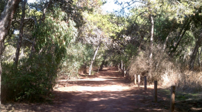 Forêt de Harhoura