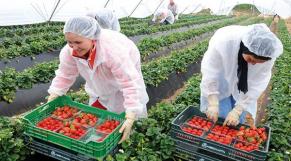 Agriculture entrepreneuriat