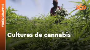 Cover Vidéo - Vidéographie. Cultures de cannabis: ce que cela rapporte, ce que le Maroc y gagnerait avec la légalisation
