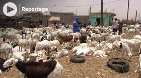 Vidéo. Mauritanie: moutons chers et clients rares à la veille de l'Aïd el-Fitr