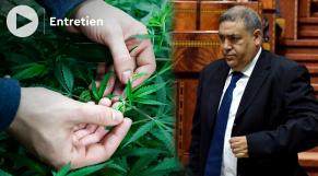 Cover : التصويت النهائي على مشروع القانون المتعلق باستعمال القنب الهندي لاغراض طبية