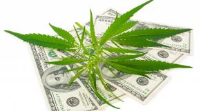 Cannabis revenus
