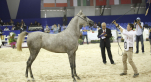 Salon du cheval - 2 octobre 2013 - 11