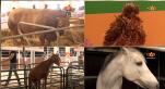 Cover: جولة برواق الماشية والدواجن في معرض الفلاحة بمكناس