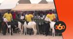Vidéo. Sénégal: les animaux de race exhibent leurs atours à Dakar