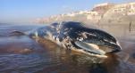 baleine cover