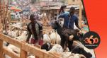 Cameroun tabaski mouton