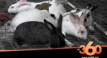 Cover Vidéo - البرد القارس يدفع بالأسر السوسية إلى التهافت على اقتناء لحوم الأرانب