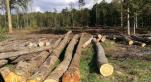 Pillage de forêts