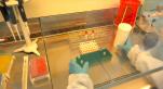 Coronavirus Maroc Institut Pasteur-3
