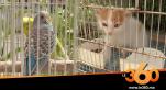 Cover_Vidéo: بائعو الحيوانات الأليفة يكشفون مدى إقبال زبنائهم خلال فترة الطوارئ