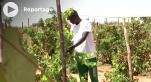 Vidéo. Niger: des pionniers se lancent dans la viticulture