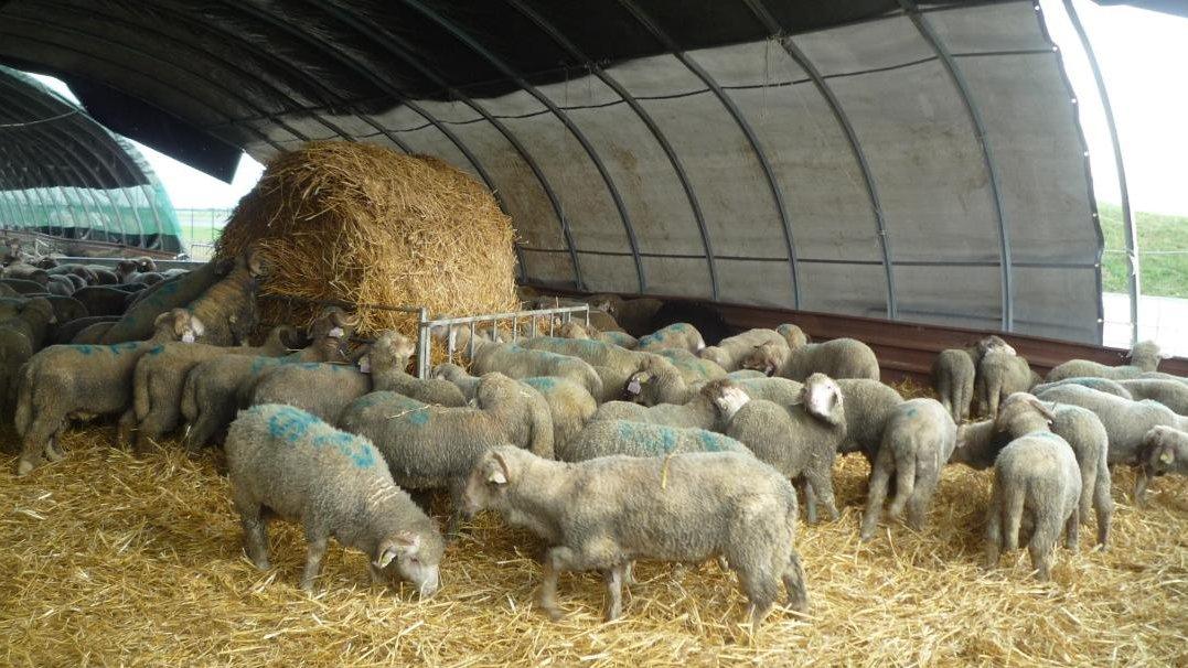 a d al adha l 39 homme sacrifi au mouton. Black Bedroom Furniture Sets. Home Design Ideas