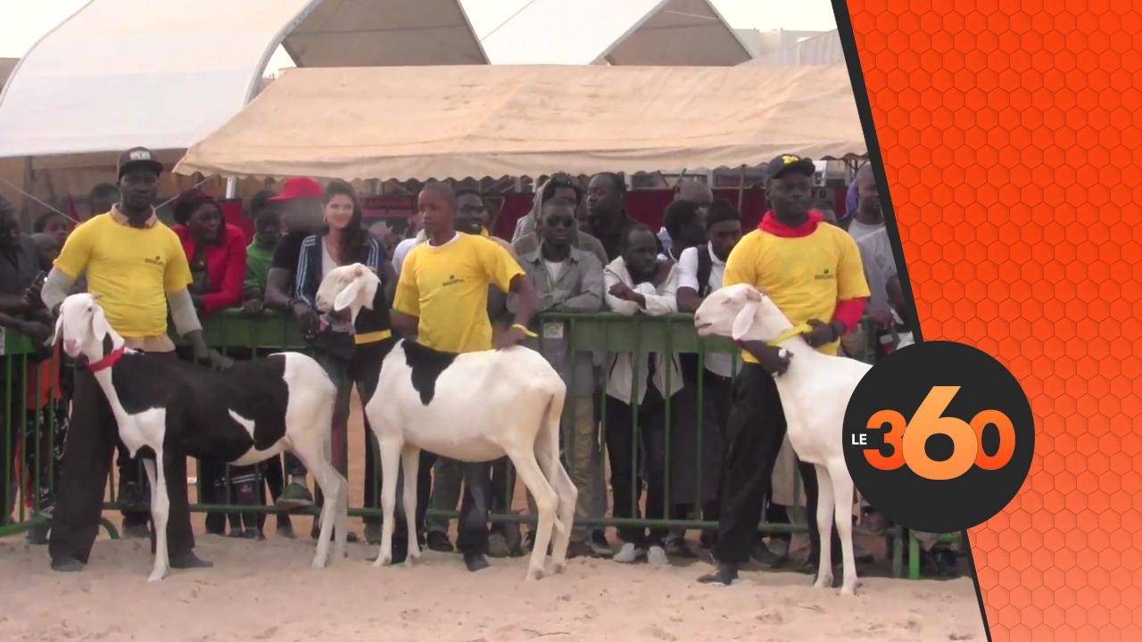 Vid o s n gal les animaux de race exhibent leurs atours for Chambre de commerce de dakar formation