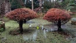 Diapo Dans Les Jardins Exotiques De Bouknadel Www Le360 Ma