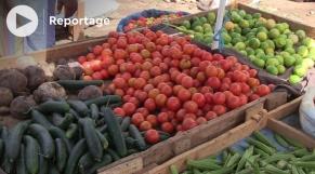 Vidéo. Mauritanie: soulagement après la levée des restrictions sur l'importation des tomate et carottes marocaines