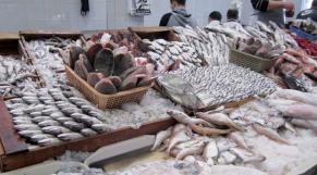 Marché de gros poisson