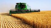 blé tendre moisson