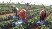 agriculteurs travailleurs