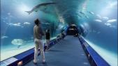 parc océanographique de la Cité des arts et des sciences de Valence