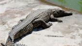 crocoparc 9