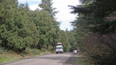 forêt de cèdre