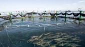 ferme aquaculture Tétouan